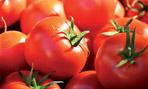 Tomates BIO*